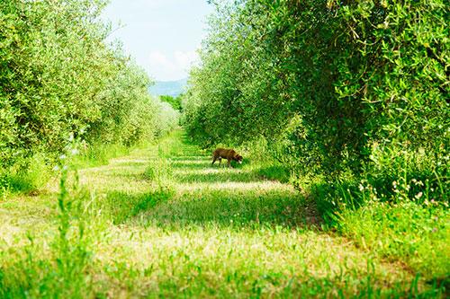 ヴェンキアレッツァ農園