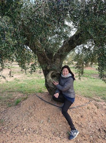 オリーブの木の下で